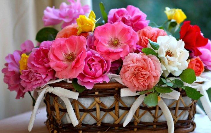 flores-lindas-wallpaper